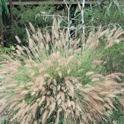 Assorted Grass