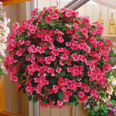 Impatiens Tempo  - Bulk Flower Seeds